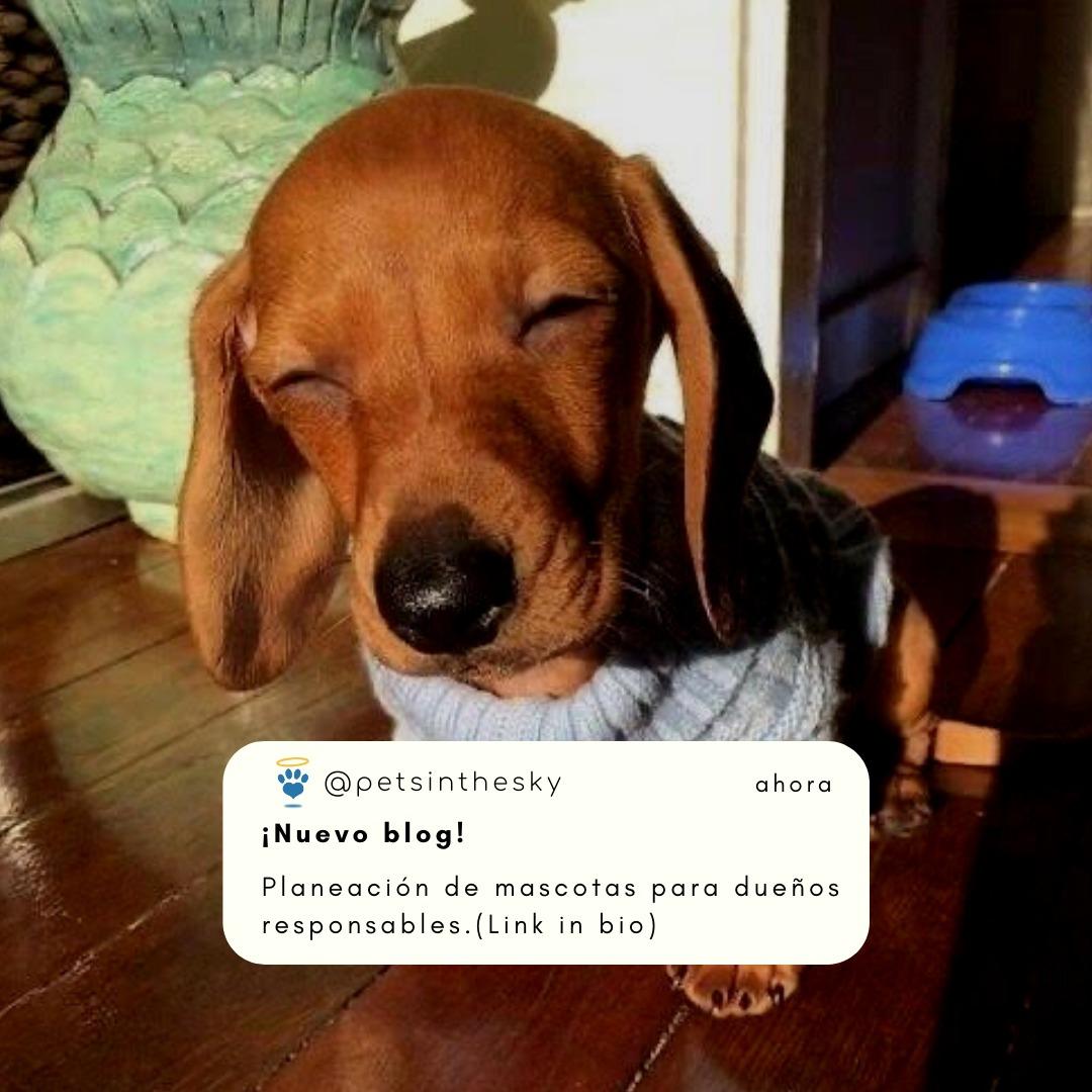 planeacion de mascotas para dueños responsables-plan de prevision